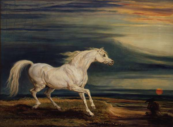 Marengo, the Arab charger, ridden by Napoleon Bonaparte at the Battle of Waterloo, 1824 (oil on panel)