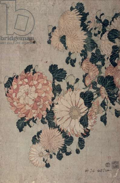 Chrysanthemums (colour woodblock)