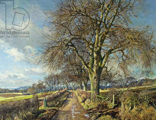 White Poplar, Carse of Gowrie, 1960 (oil on canvas)