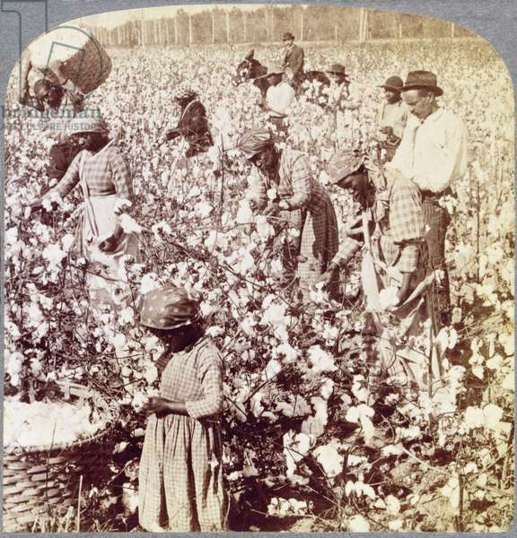 'Cotton is King', Georgia Plantation Scene, 1895 (b/w photo)