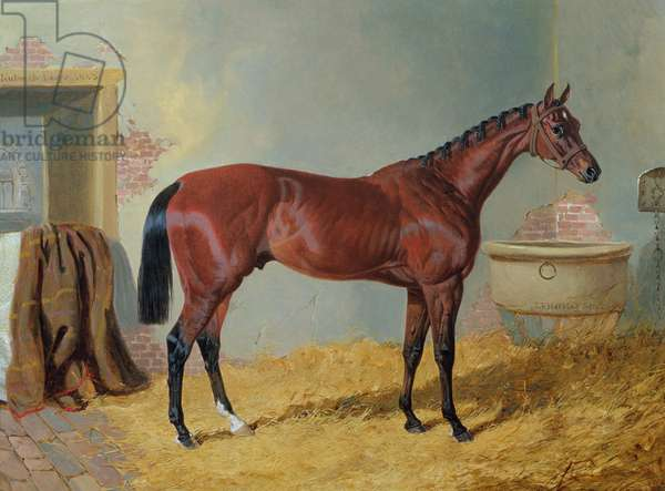 Mr S. Wrather's 'Nutwith' in a stable (oil on canvas)