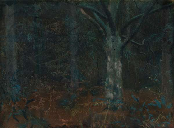 Old Sycamore (pastel on paper)