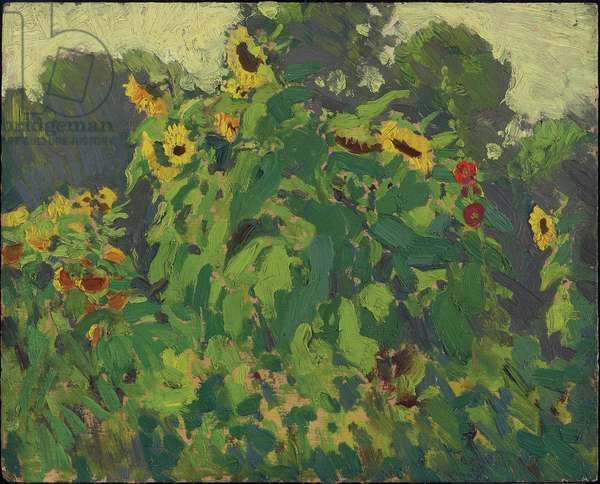 Sunflowers, Thornhill, 1916 (oil on composite wood-pulp board)