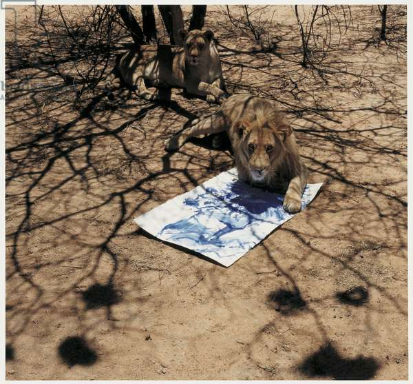 Lion and Painting, Namibia