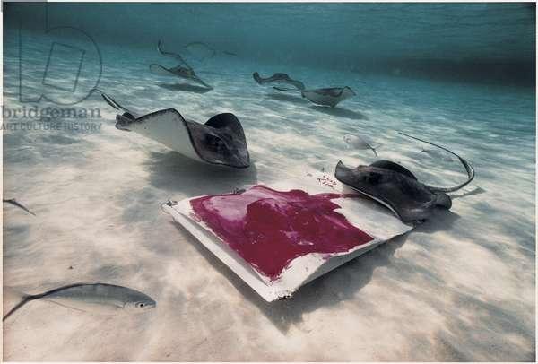Stingrays Cayman
