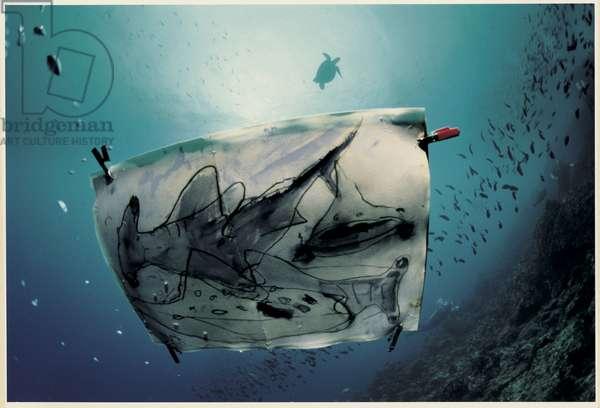 Hammerhead Shark Painting in Water, Galapagos