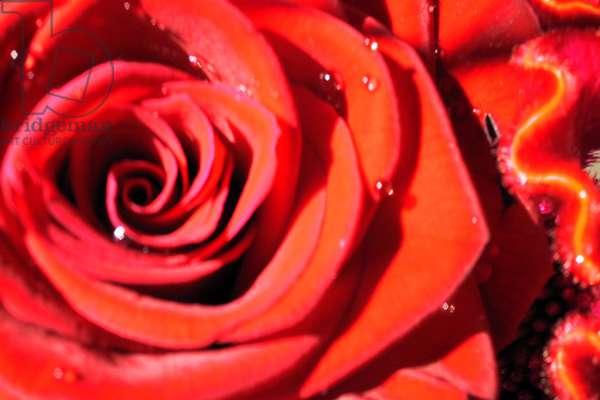 Valentine's (photo)