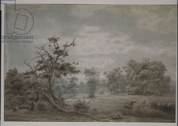 Forest landscape from Dusseldorf, 1853 (pen & ink and w/c on paper)