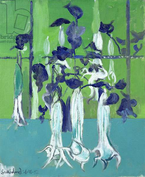 Datura Flowers, 1957 (oil on canvas)