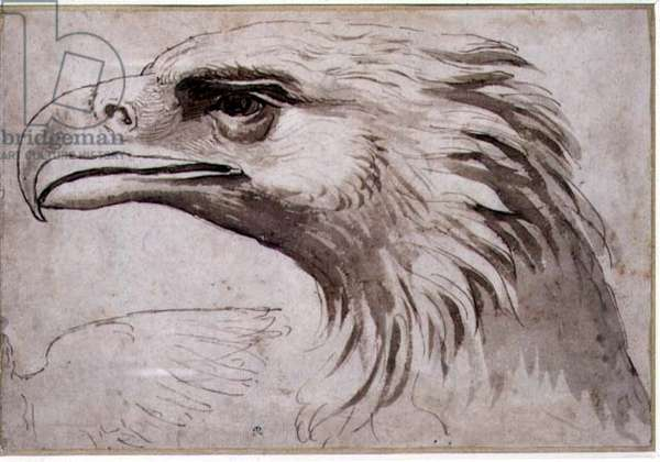 Head of an Eagle, c.1527-8 (pen and brown ink and wash)