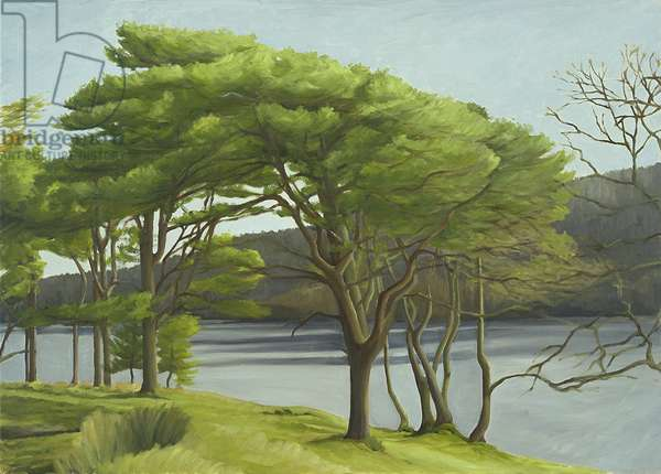 Pine Trees, Usk Reservoir, 2005 (oil on canvas)