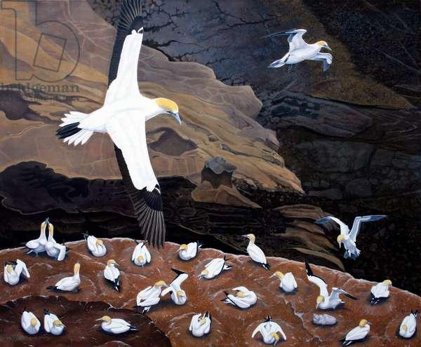 Gannet colony, Muriwai, New Zealand (oil on canvas)