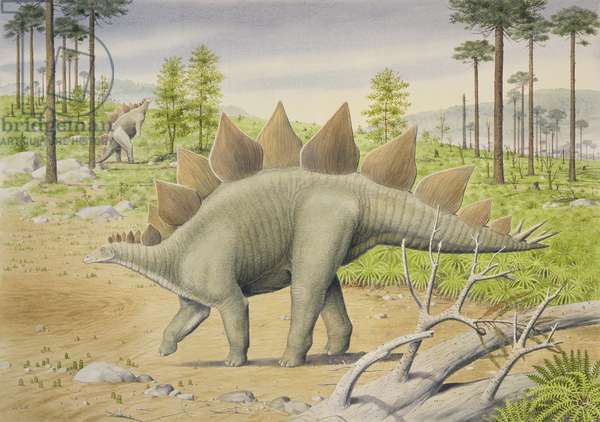 Stegosaurus (w/c on paper)