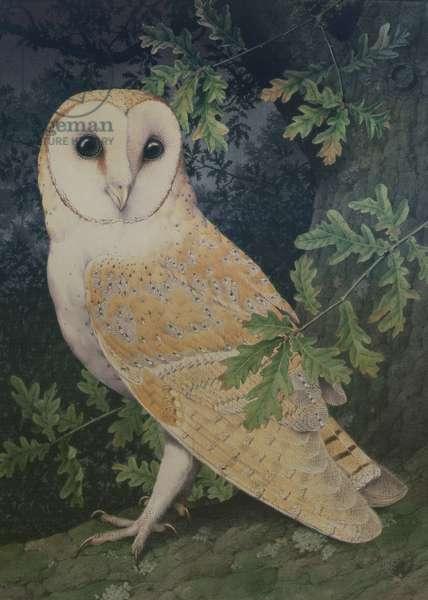 Barn Owl (w/c on paper)
