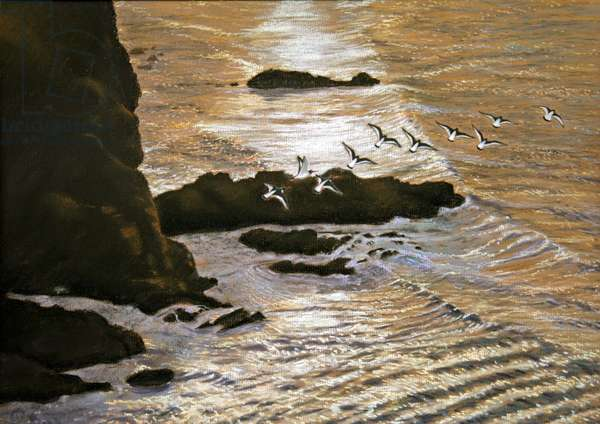Evening oyster catchers (pastel on paper)
