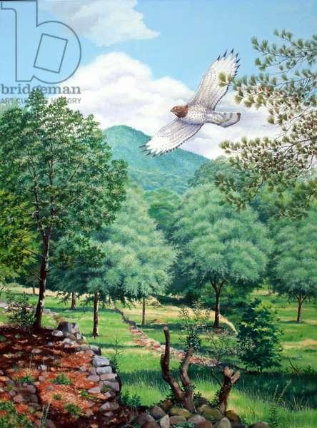 Short-toed eagle, France (oil on canvas)