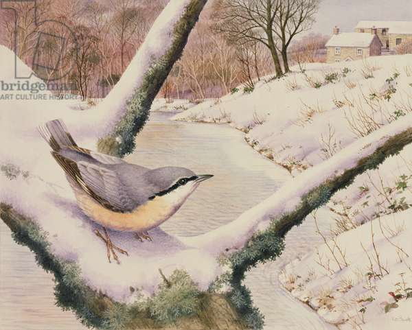 Nuthatch (w/c on paper)