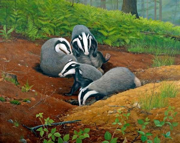 Badgers grooming, Devon (oil on canvas)