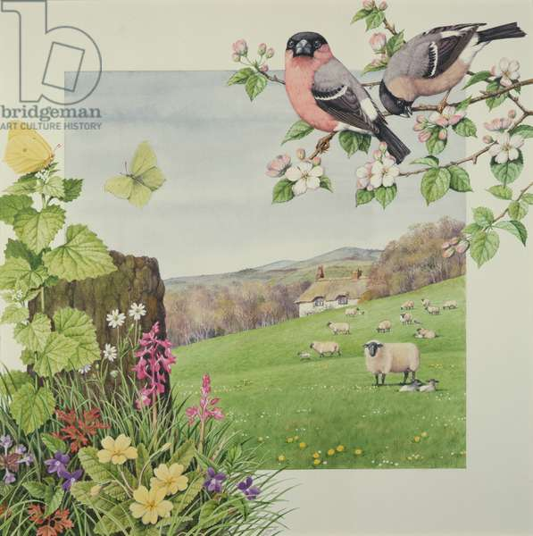 Sheep and Bullfinches (w/c on paper)