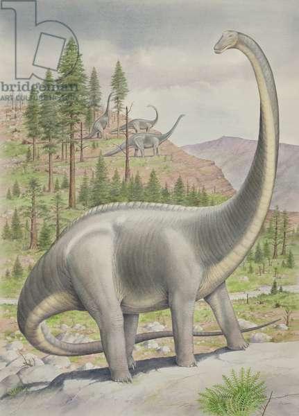Diplodocus (w/c on paper)