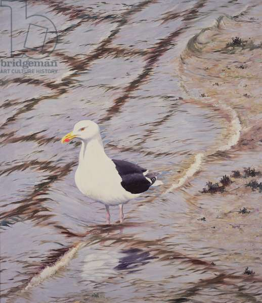 Black-backed Gull (oil on canvas)