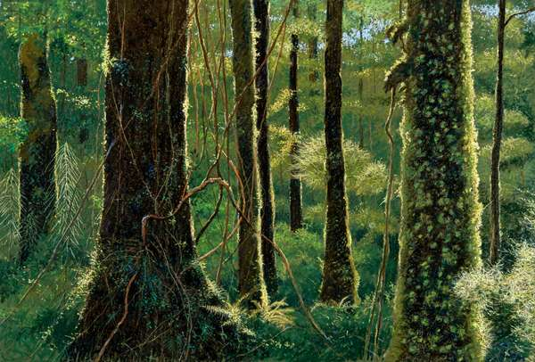 Beech forest, New Zealand (pastel on paper)