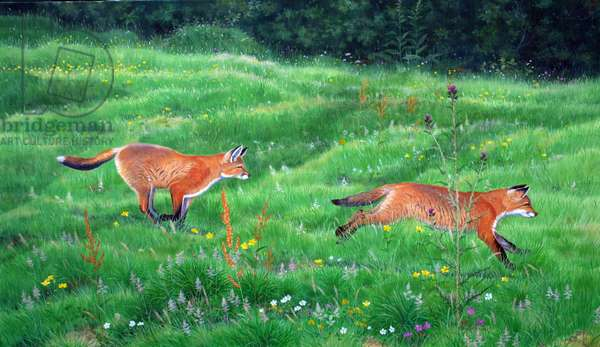 Fox cubs playing (oil on canvas)