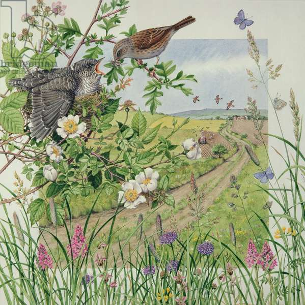 Feeding the cuckoo (w/c on paper)
