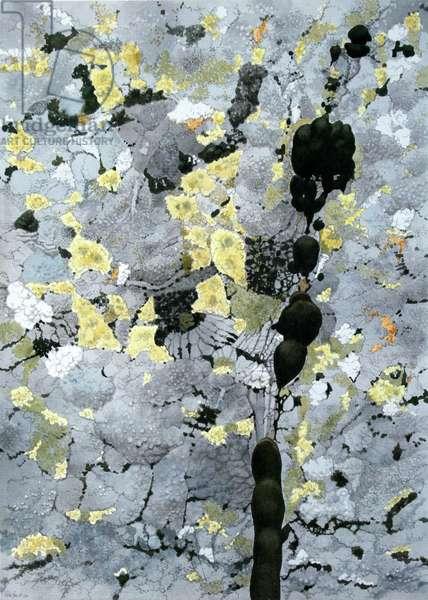 Lichen, France (w/c on paper)