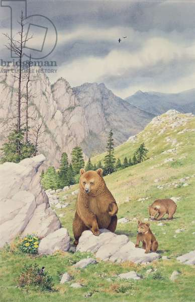 Greek Brown Bear and Cubs (w/c on paper)