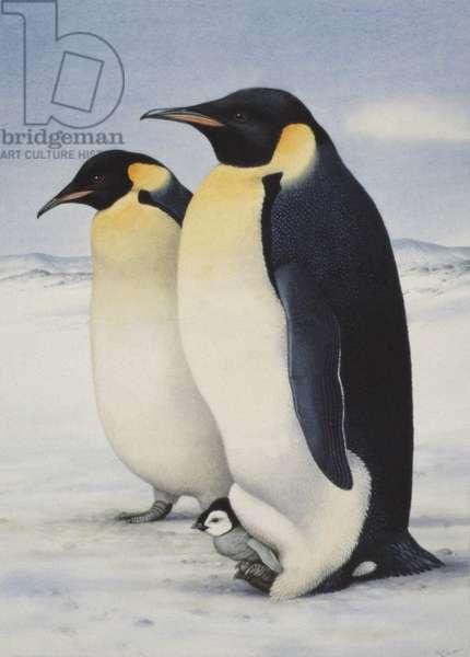 Emperor Penguins (w/c on paper)