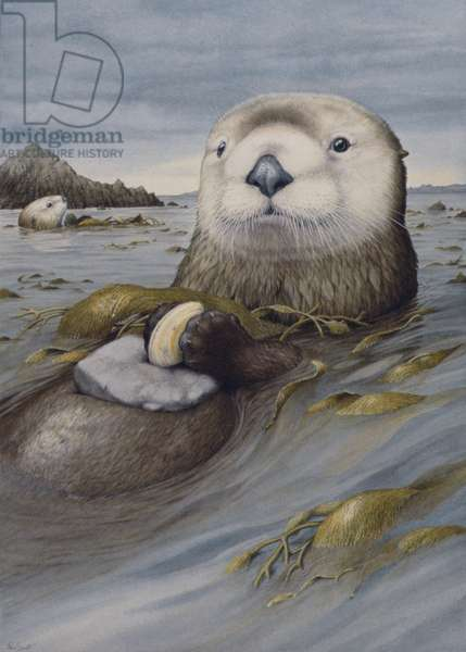 Otters (w/c on paper)