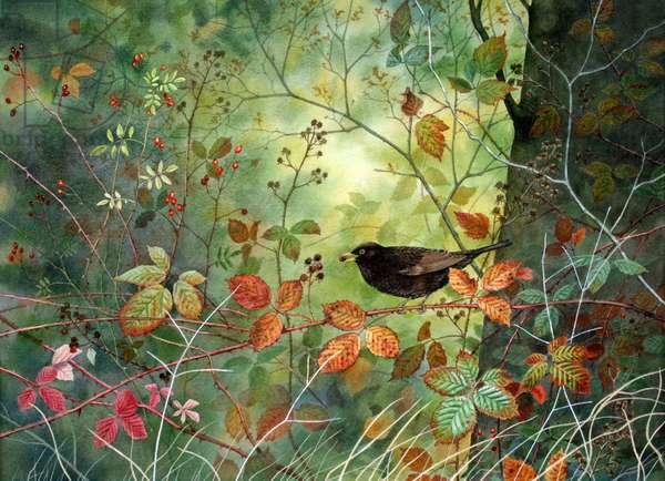 Autumn Blackbird (w/c on paper)