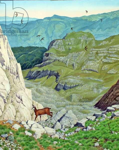 Chamois, Pindos Mountains (oil on canvas)