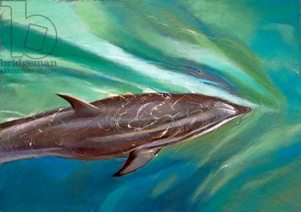 Dolphin (pastel on paper)