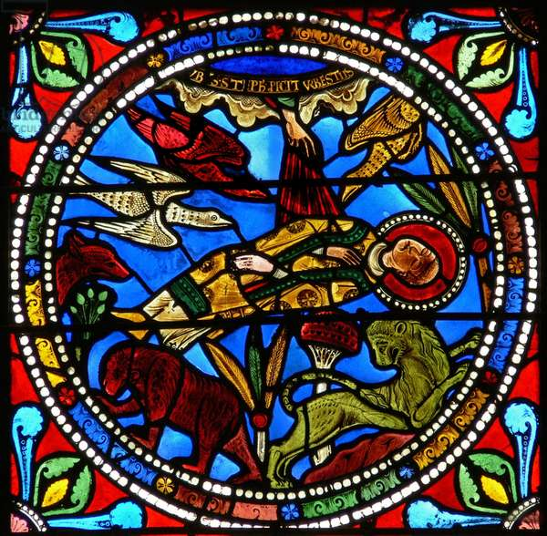 Window wXVII depicting St Stephen's dead body is left to the animals (?) (stained glass)