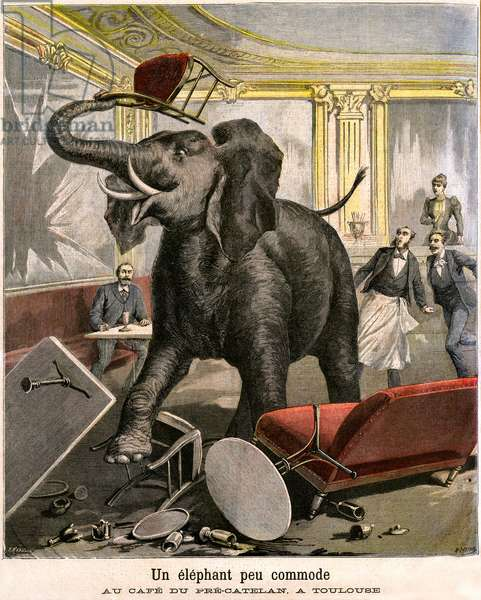 An uncomfortable elephant: the pachyderm escapes from a circus menagerie breaks everything in the cafe of Pre-Catelan in Toulouse. Engraving by Meaulle and Meyer in the last cover of the PETIT JOURNAL supplement illustrated n 51 of November 14, 1891. Miscellaneous made with animals