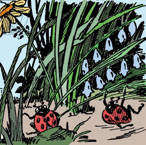Ladybugs in the grass. Illustration of a school book at the beginning of the 20th century.