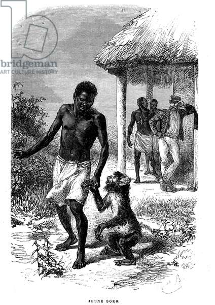 Young Soko monkey in Africa. Engraving by Emile Bayard (1837-1891) illustrating the last stories of explorer David Livingstone, (1866-1873) - French edition Hachette 1879 - Young soko monkey, drawing by Emile Bayard from The Last Journals of David Livingstone -
