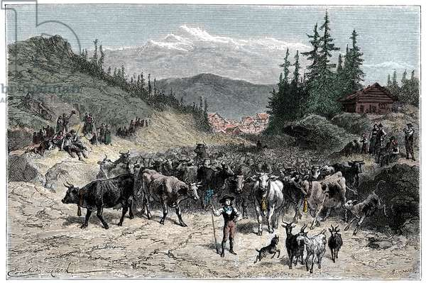 Alps: the jodel or depart herds (cows, goats) towards the pastures. Illustration by Emile Bayard for the book Les Montagnes d'Albert Dupaigne, edition Mame 1881.