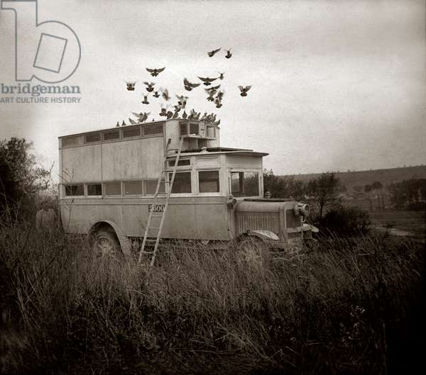Transport of passenger pigeons by means of a truck used as a mobile dovecote. 1914-1918 (stereoscopic glass plate)