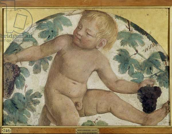 Harvesting putti - Putto under a pergola, c.1514 (detached fresco carried on board)