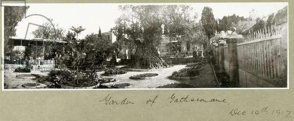 Garden of Gethsemane, 14th December 1917 (b/w photo)
