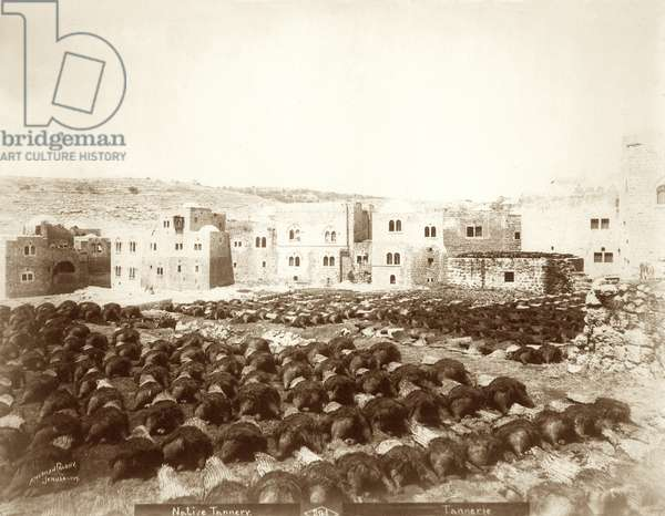 Tannery at Hebron with hides laid out in the foreground, 1898-1911 (b/w photo)