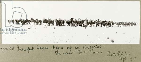 N.Z.M.F.A. transport horses drawn up for inspection on the beach, Khan Yunis, September 1917 (b/w photo)