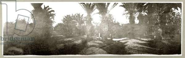 Palm Grove, c.1917-18 (b/w photo)