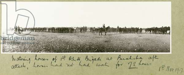 Watering horses of 1st A.L.H. Brigade at Beersheba after attack, horses had not had water for 72 hours, 1st November 1917 (b/w photo)
