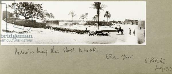 Bedouins bring their stock to water, Khan Yunis, South Palestine, July 1917 (b/w photo)