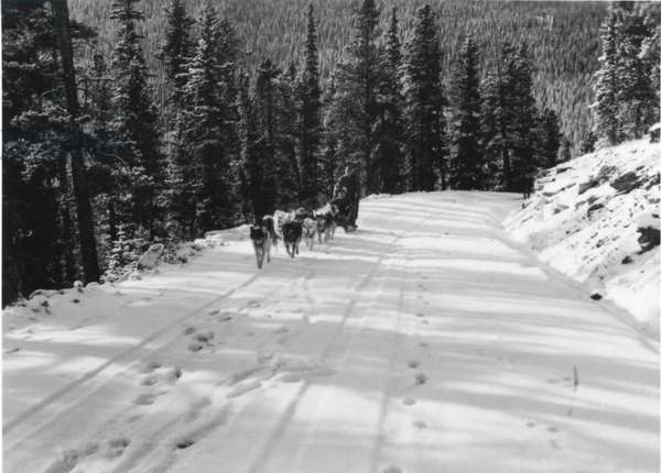 Appointed Lieutenant on active duty, Paul-Emile Victor is a polar instructor at the Arctic Training School, including dog sledding crews, Echo Lake, Colorado, USA, October 1943 (b/w photo)