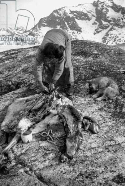 Cutting up of seals by Kara (adoptive mother of paul-Emile Victor), during polar expedition in Greenland, Kangerdlugssuatsiak, Autumn, 1936 (b/w photo)
